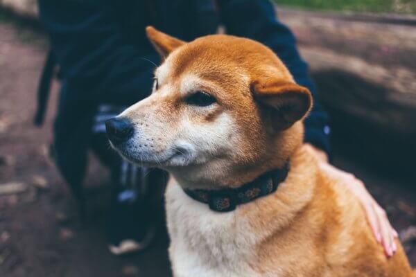 Karkasiko koirasi? 8 selkeää toimintaohjetta, joiden avulla löydät koirasi